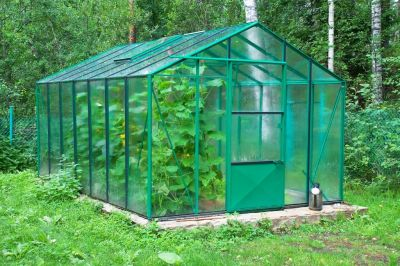 Give the greenhouse a good scrub