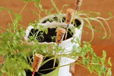 Plant markers for the garden kitchen